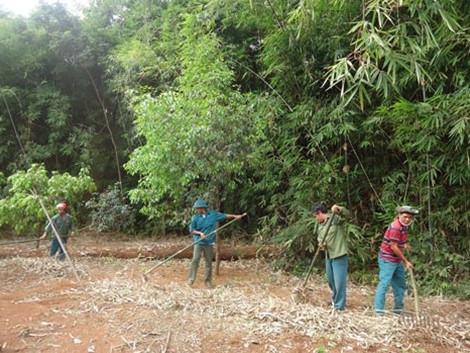 Vườn Quốc gia Bù Gia Mập nỗ lực phòng chống cháy rừng (1/3/2016)
