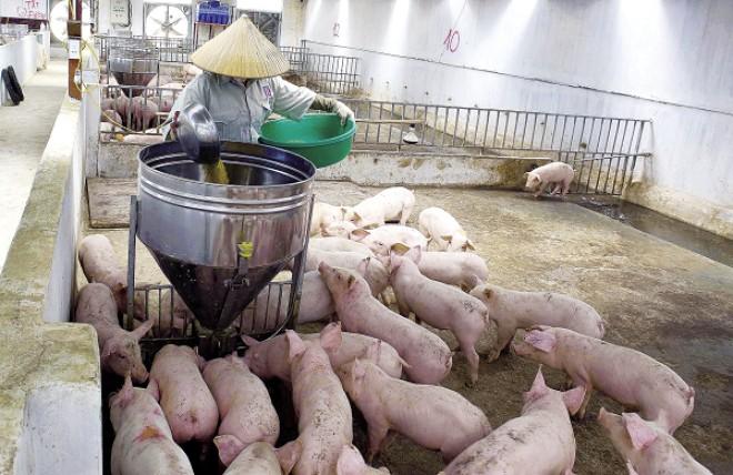 Ngành chăn nuôi trước ngưỡng cửa TPP.
