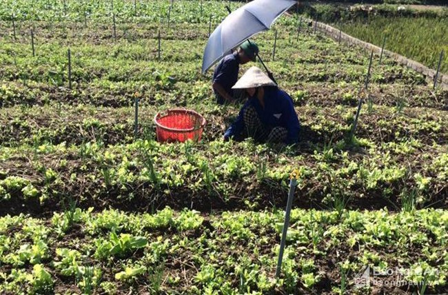Khắc phục sản xuất nông nghiệp - nuôi trồng thủy sản sau mưa bão (10/11/2017)