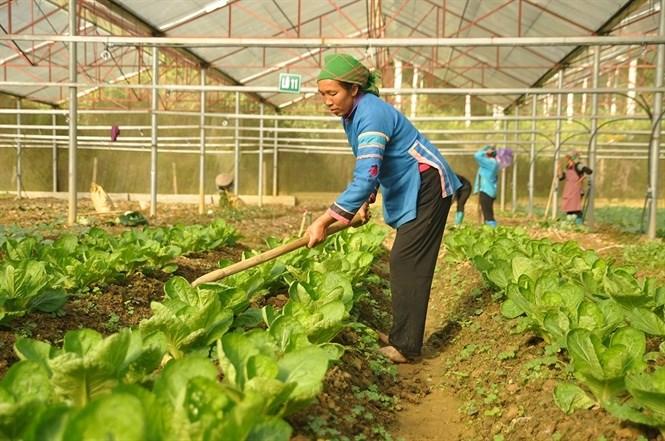 Những khởi sắc nông nghiệp ứng dụng công nghệ cao ở tỉnh Sơn La (9/2/2018)