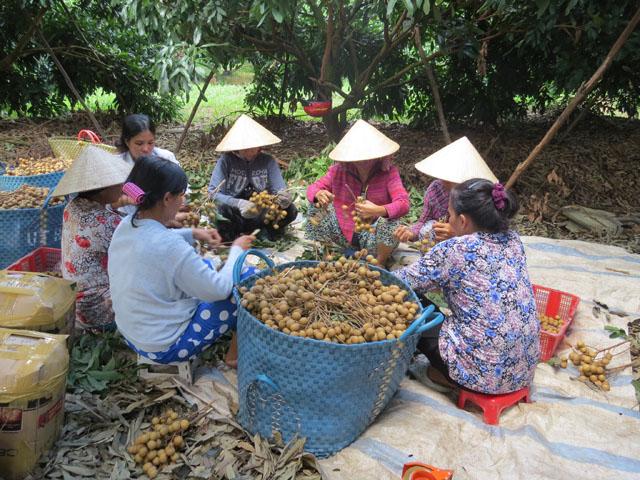 Xã An Nhơn, huyện Châu Thành: Sắc xuân hội quán đất sen hồng (11/2/2018)