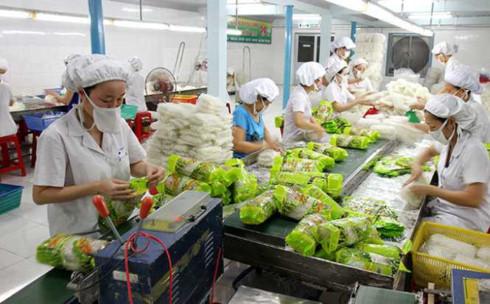 Xuất khẩu rau quả 2 tháng đầu năm tiếp tục bứt phá ngoạn mục (1/3/2018)