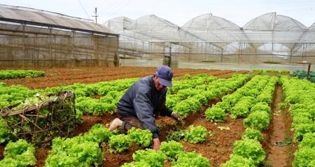 Thời sự đêm ngày 25/12/2014: Năm 2015 sẽ là năm toàn ngành nông nghiệp triển khai an toàn vệ sinh nông sản