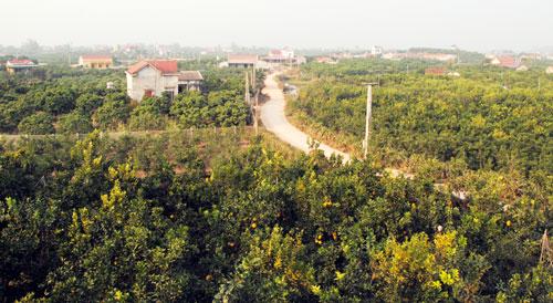 Lục Ngạn, Bắc Giang định hướng phát triển bền vững vùng cây ăn trái (27/12/2015)