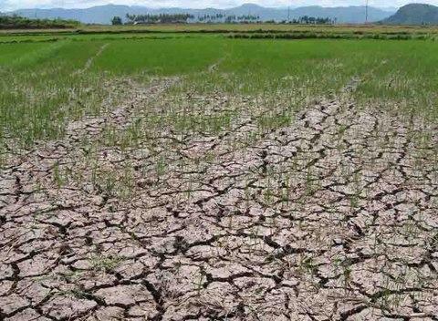 Hạn hán năm nay có khả năng sẽ xảy ra sớm và trầm trọng hơn cả năm ngoái (Thời sự đêm 18/1/2016)