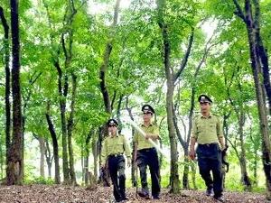 Tam Đảo: quyết liệt ngăn chặn cháy rừng (25/3/2016)
