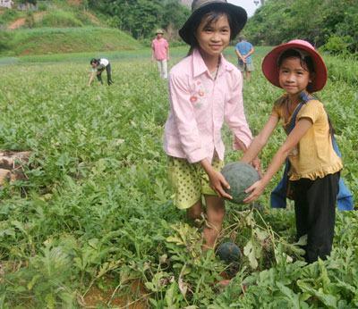 Nông nghiệp nông thôn ngày 27/10/2014:  Xã Quang Kim, huyện Bát Xát, tỉnh Lào Cai xóa nghèo nhờ chuyển đổi cơ cấu nông nghiệp hiệu quả.