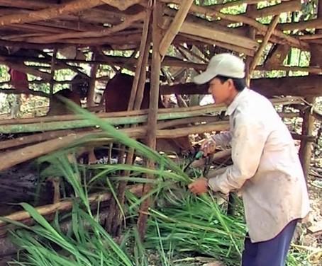 Nông nghiệp và nông thôn ngày 20/9/2014: Mô hình giảm nghèo hiệu quả ở tỉnh Đồng Nai.