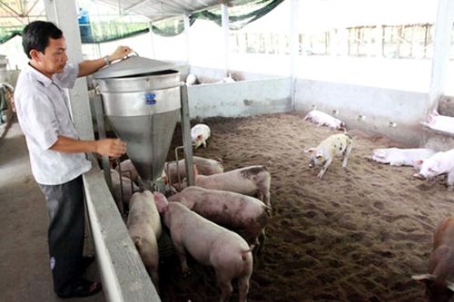 Nông nghiệp và nông thôn ngày 12/9/2014:  Mô hình chăn nuôi đại gia súc thân thiện với môi trường.