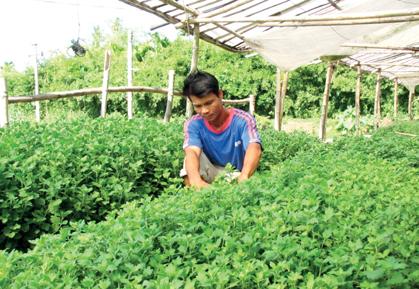 Nông nghiệp và nông thôn ngày 10/9/2014: Mô hình 3 trong 1 giúp nông dân Ninh Bình thoát nghèo