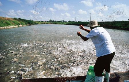 Biển đảo Việt Nam ngày 23/8/2014:Khai thác thủy sản bằng giã cào bay: Hiểm họa khó lường.