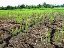 Nông nghiệp và nông thôn ngày 05/8/2014: Những tác động của biến đổi khí hậu đến sản xuất nông nghiệp