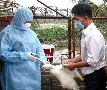Nông nghiệp và nông thôn ngày 30/6/2014: Hướng dẫn sử dụng vắc-xin phòng bệnh cho gia súc, gia cầm