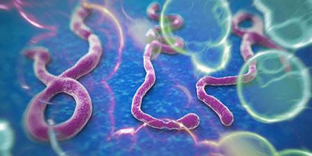 Dịch Ebola diễn biến phức tạp và hiện đã lan ra bên ngoài Tây Phi