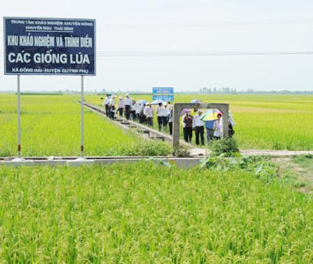Nông nghiệp và nông thôn ngày 23/9/2014: Khuyến nông Thái Bình: Chung sức xây dựng nông thôn mới