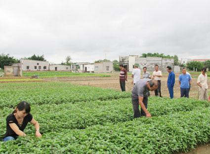 Nông nghiệp và nông thôn ngày 21/7/2014: Xây dựng nông thôn mới gắn với sản xuất nông nghiệp sạch, an toàn ở Bà Rịa-Vũng Tàu