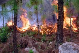 Thời sự đêm ngày 20/9/2014: Cháy rừng tại xã Hải Sơn, huyện Hải Lăng, tỉnh Quảng Trị gây sự cố mất điện đường dây 500 KV Hà Tĩnh - Đà Nẵng