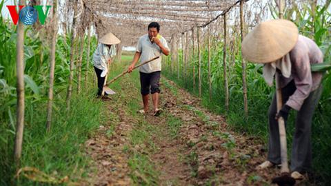 Nông nghiệp và nông thôn ngày 29/6/2014: Dự án tài chính nông thôn: Tiếp sức cho nông dân xóa đói giảm nghèo