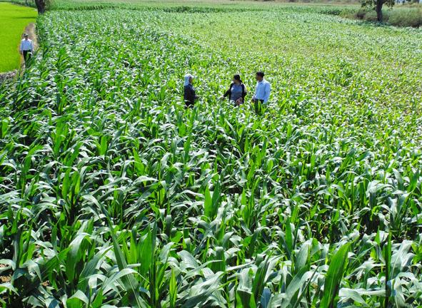 Nông nghiệp và nông thôn ngày 19/7/2014: Hướng tới nền nông nghiệp thích ứng với biến đổi khí hậu