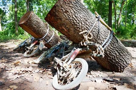 Đắc Lắc: Tiếng kêu cứu từ những cánh rừng (*) Bài 1 - Ồ ạt phá rừng - công khai bán đất