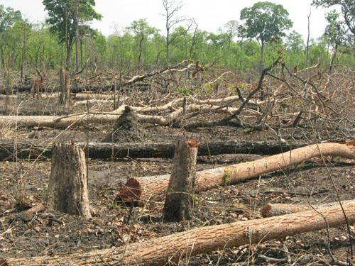 Đắc Lắc: Tiếng kêu cứu từ những cánh rừng (*) Bài 2 -  Phá rừng ở những dự án ổn định dân cư nửa vời