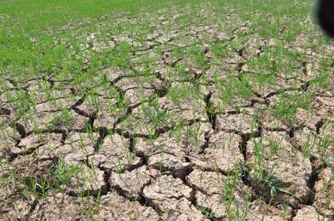 Ngành nông nghiệp nước ta sẽ phải đối mặt với hiện tượng El Nino kéo dài nhất trong 60 năm qua. (Thời sự đêm 31/10/2015)