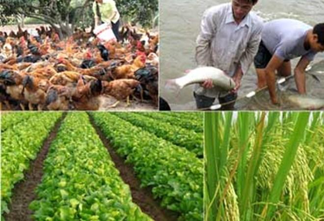 Cần đa dạng các mô hình sản xuất nông nghiệp thích ứng với biến đổi khí hậu
