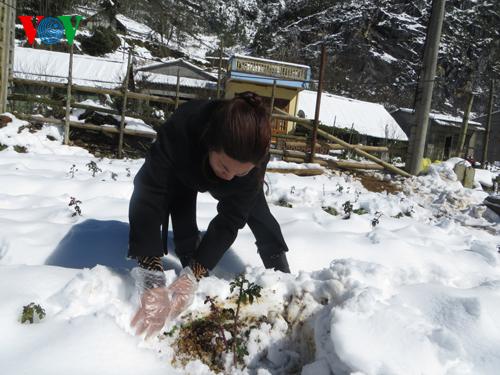 Thời sự chiều ngày 11/01/2015: Người dân tại các huyện vùng cao của tỉnh Lào Cai bắt đầu khôi phục sản xuất sau những ngày mưa tuyết.