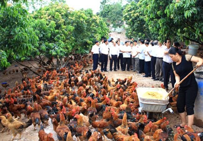 Nông nghiệp và nông thôn ngày 08/02/2015: Bắc Giang: Phát triển thương hiệu