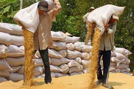 Tiêu thụ - Bài toán khó của sản xuất nông nghiệp