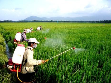 Chuyên gia của bạn ngày 18/3/2015: Tư vấn phòng trừ sâu bệnh hại lúa Đông Xuân miền Bắc.