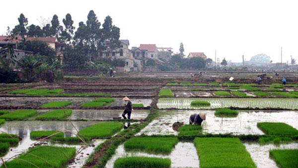 Hạn hán và bài học chủ động trong sản xuất nông nghiệp
