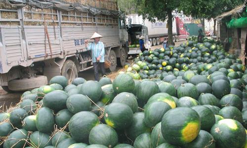 Thời sự sáng ngày 12/4/2015: Trước tình trạng dưa hấu xuất khẩu bị ùn ứ ở Cửa khẩu Lạng Sơn, Bộ Công thương đã và đang thực hiện nhiều giải pháp nhằm giải quyết vấn đề tiêu thụ sản phẩm này trong thời điểm chính vụ