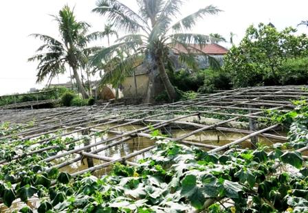 Nông nghiệp và nông thôn ngày 14/4/2015: Yên Khánh, Ninh Bình: Phát huy hiệu quả xây dựng nông thôn mới.