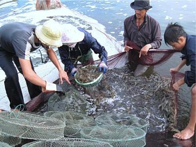 Diễn đàn kinh tế ngày 26/4/2015: Cà Mau tìm hướng phát triển bền vững cho ngành thủy sản