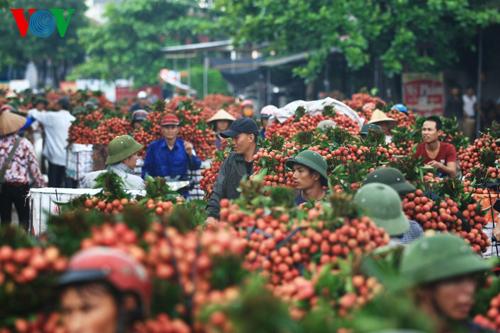 Thời sự trưa ngày 28/5/2015: Những lô vải thiều đầu tiên của Việt Nam sẽ được xuất khẩu sang thị trường Mỹ vào ngày 30/5.