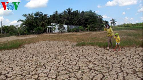 Thời sự đêm ngày 8/6/2015: Nắng hạn kéo dài trong thời gian qua khiến nhiều nông dân phải bỏ ruộng, nguy cơ thiếu đói ở nhiều địa phương có thể xảy ra.