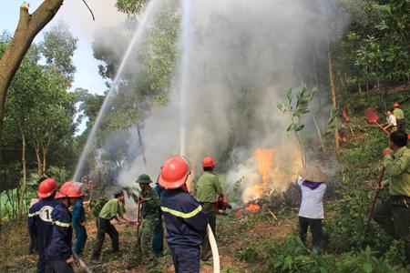 Hà Tĩnh tích cực phòng cháy, chữa cháy rừng. (Nông nghiệp và nông thôn ngày 14/7/2015)