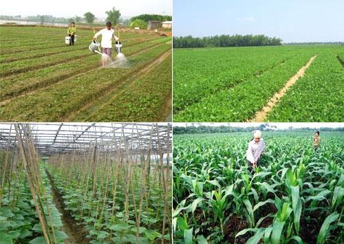 Tỉnh Hòa Bình tích cực chuyển đổi cơ cấu cây trồng vật nuôi. (Nông nghiệp và nông thôn ngày 20/7/2015)