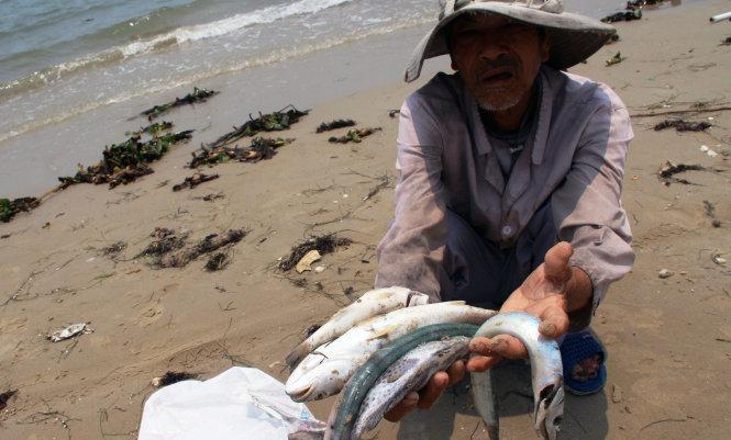 Cá chết hàng loạt ở miền Trung. (23/4/2016)