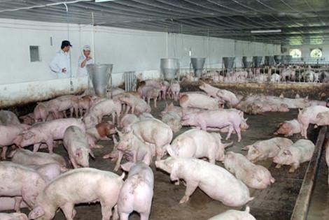 Sử dụng chất cấm: lỗi không chỉ từ người chăn nuôi (18/5/2016)