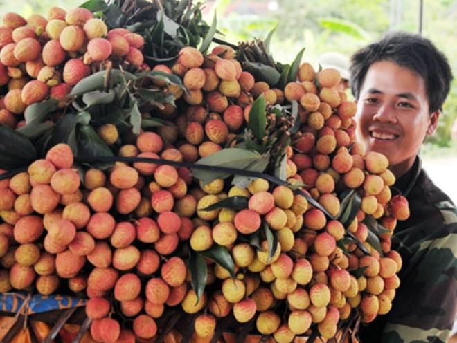 Lần đầu tiên, doanh thu từ vải thiều Bắc Giang cán mốc 5000 tỷ đồng trong vụ vừa qua (Thời sự trưa 20/8/2016)
