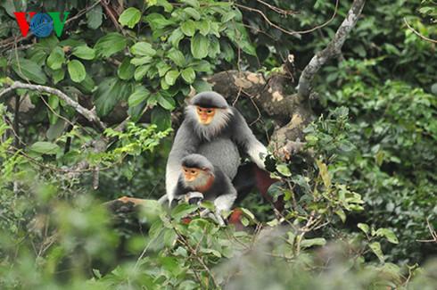 Không lợi dụng phát triển du lịch trong các khu bảo tồn thiên nhiên để phá rừng (23/10/2017)