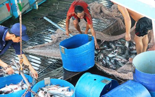 Phát triển tiêu thụ cá tra vào thị trường Trung Quốc (23/10/2017)