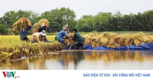 Từ biến động thị trường nhìn lại thực tế ngành lúa gạo Việt Nam (1/11/2017)