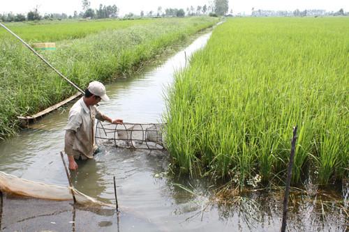 Thay đổi phương thức canh tác nhằm giảm thiểu những tác động của biến đổi khí hậu trong sản xuất nông nghiệp (28/12/2017)