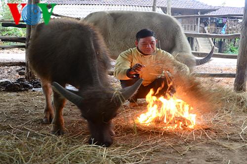 Nâng cao ý thức người dân, chủ động phòng chống rét cho đàn vật nuôi (21/12/2017)