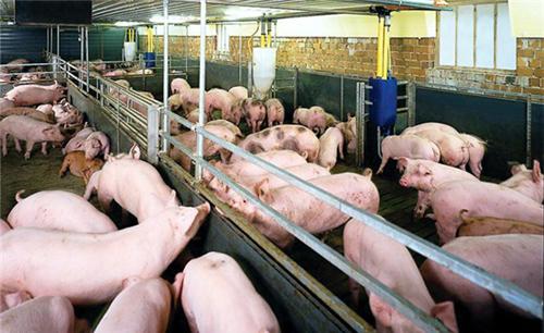 Đẩy lùi tình trạng lạm dụng kháng sinh trong chăn nuôi (16/02/2017)