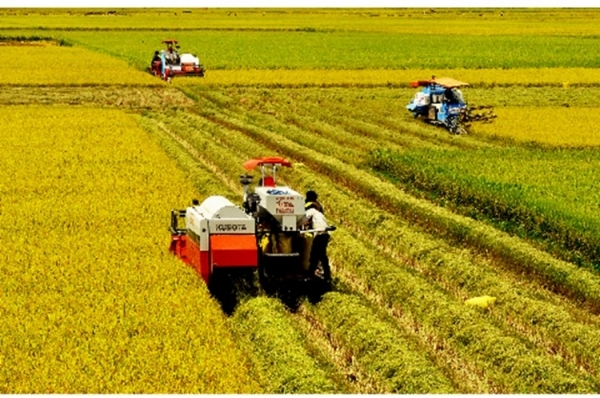 Giải pháp nào để phát triển bền vững ngành lúa gạo vùng Đồng bằng sông Cửu Long (16/3/2017)