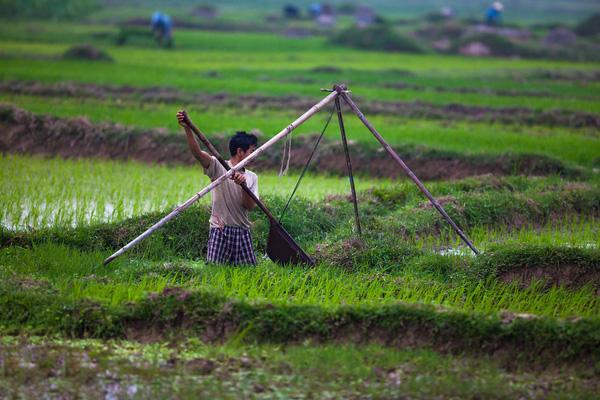Đồng ruộng: Kẻ chán người mê  (29/3/2017)